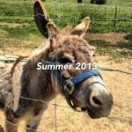 My Summer 2013 wrap-up… and a Fall preview