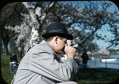 Cherry Blossoms in DC- grandfather taking photos